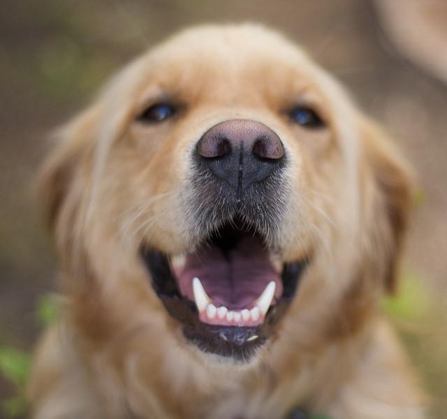 A coleira que permite ao teu cão comunicar contigo!